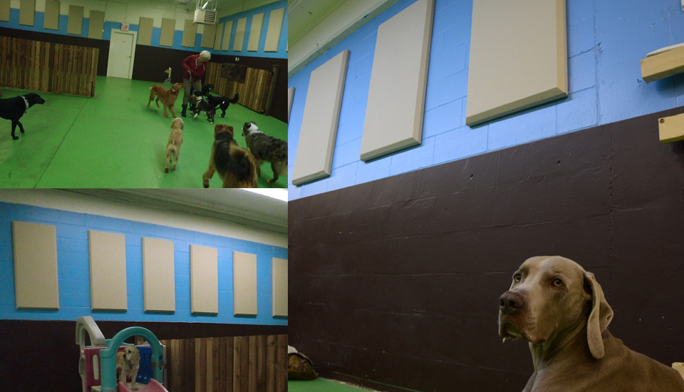 Broadway panels in dog kennel